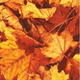 Reminder: MTAS Annual Autumn Exhibition 2021