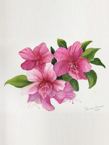 Botanical Art Class with Pamela Powell – Returning! Tuesdays 10th Sept 2019
